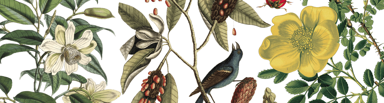 Botanical Illustration: Shakespeare's Gardens