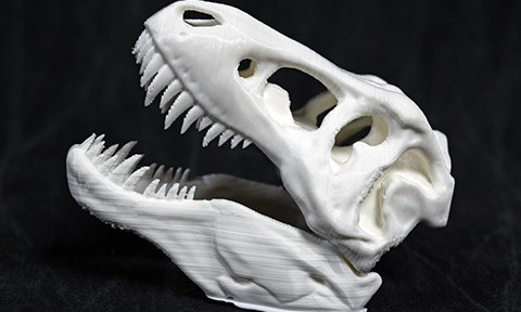 T-Rex Skull printed on a 3D printer